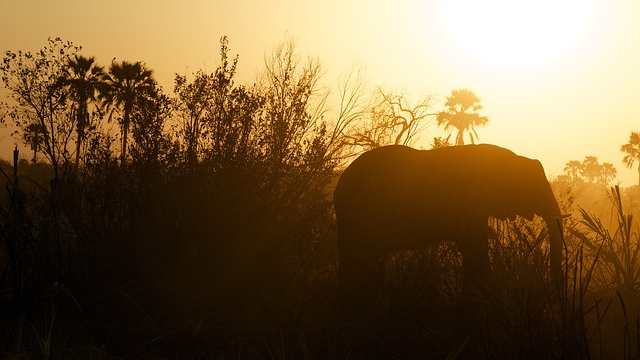 Nutrient Hotspots in Savanna Thanks to Ancient Herders