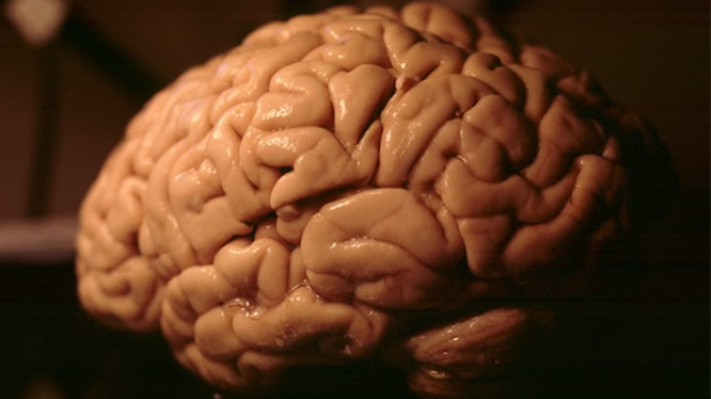 Researchers decode patterns that make our brains human
