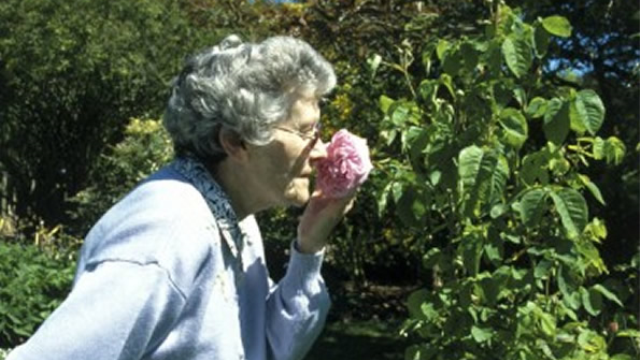 Inability to recognize and recall odors may identify those at risk for Alzheimer's disease