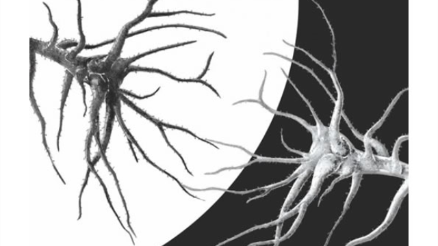 New insights into the circuits of sight: Study reveals cortical circuits that encode black and white