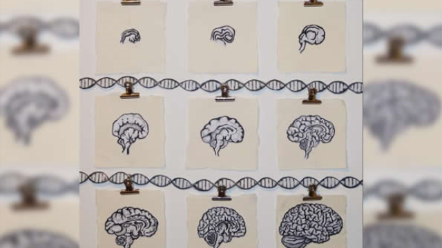 Schizophrenia-associated genetic variants affect gene regulation in the developing brain