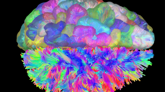 Brain networking: Brain scans used to determine mechanism behind cognitive control of thoughts