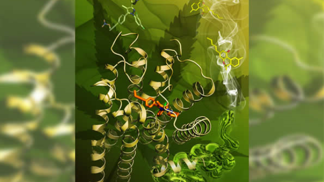Structure of primary cannabinoid receptor is revealed