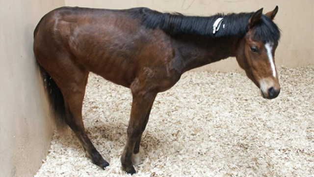 Horse illness shares signs of human disease