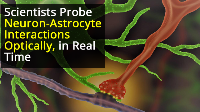 Optical Neuron-Astrocyte Proximity Assay at Synaptic Distance Scales