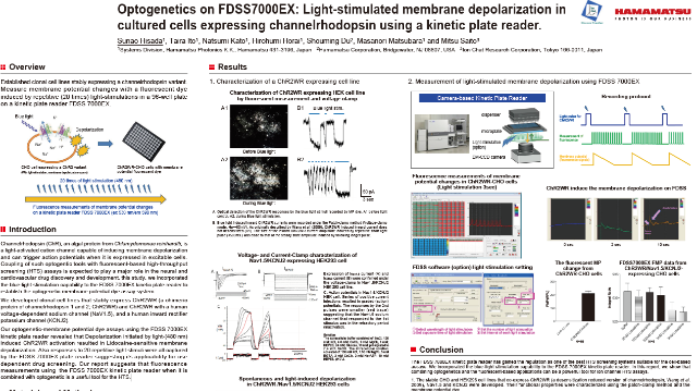 Optogenetics on FDSS7000EX: Light-stimulated membrane depolarization in cultured cells expressing channelrhodopsin using a kinetic plate reader