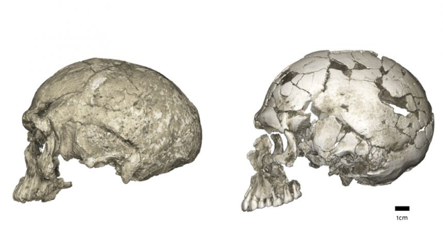 Out of Africa? Human Evolution Isn't as Simple as That