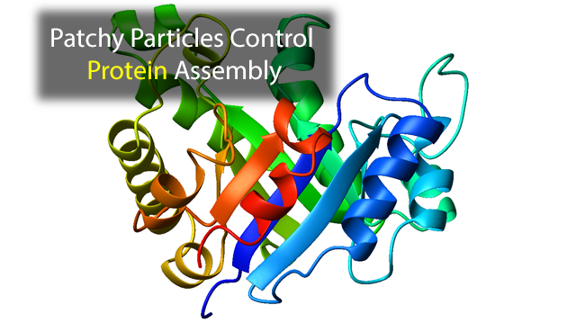 Patchy Particle Algorithm Helps Sketch Out Protein Formation