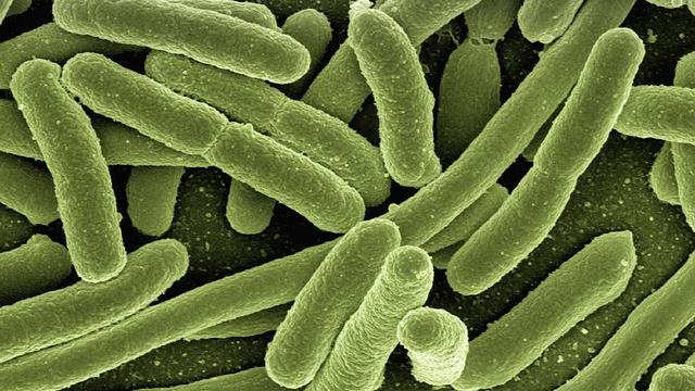 Pathogenic Bacteria Evade Antibiotics by Hibernating