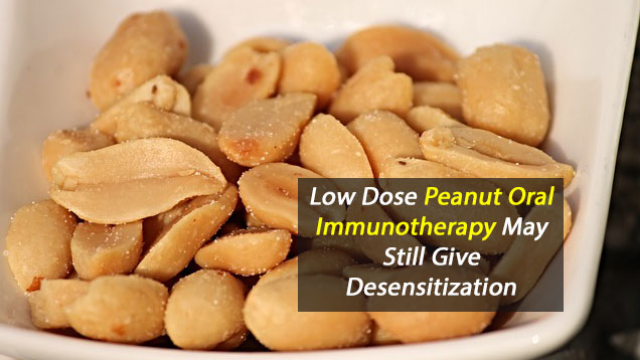 Patients Taking Lower Maintenance Doses of Peanut Oral Immunotherapy  May Still Achieve Desensitization