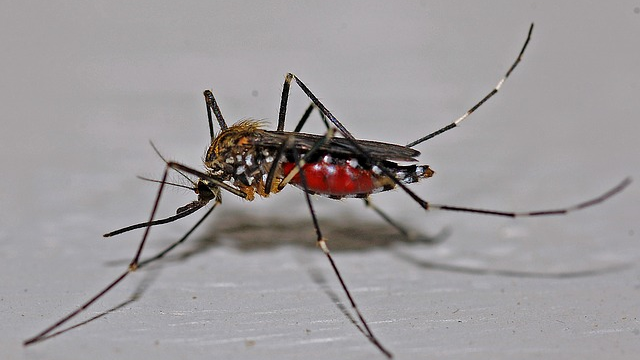 Possible Protection from Zika Symptoms Thanks to Dengue Immunity