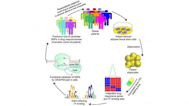 Predicting Anti-Diabetes Drug Response Using Fat Cell Genetics