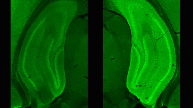 Primed Proteins Promote Memories of New Places in Minutes
