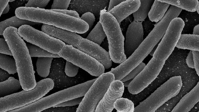 Probiotic use is a Link Between Brain Fogginess and Severe Bloating
