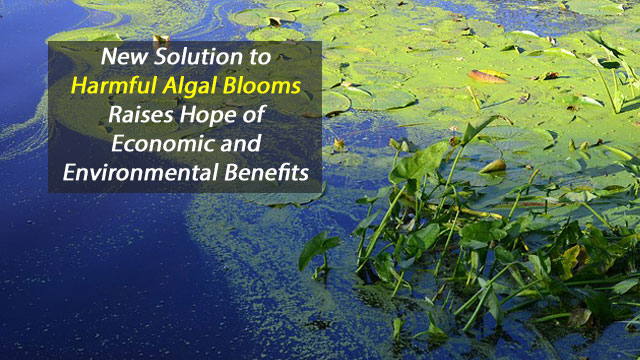 Promise for Combating Harmful Algal Blooms