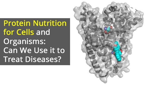 Protein Nutrition for Cells and Organisms: Can We Use it to Treat Diseases?