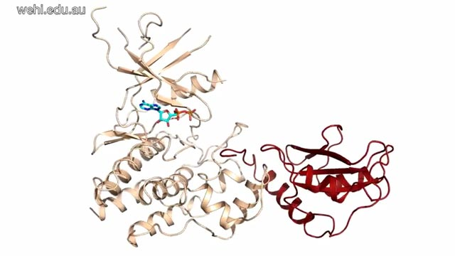 Protein Pair Provides Blueprint for Future Drugs
