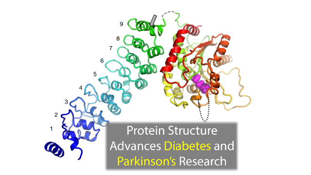 Protein Structure Advances Diabetes and Parkinson's Research