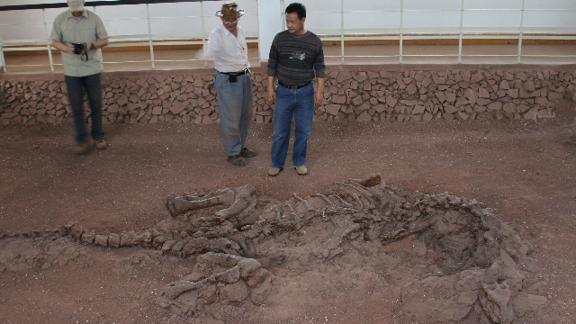 Proteins Preserved Within 195-Million-Year-Old Rib of Sauropodomorph Dinosaur
