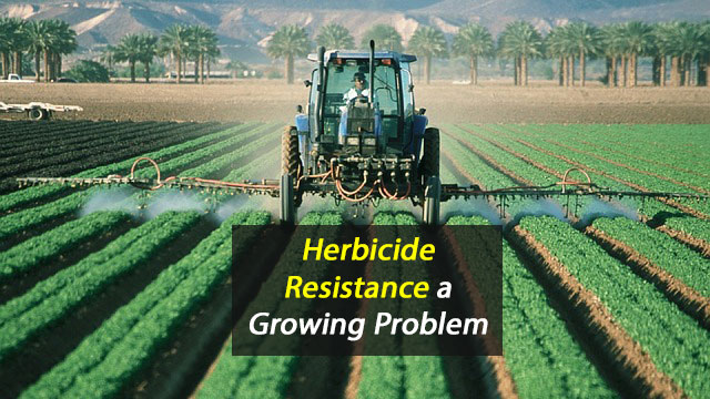 Put Aside the Herbicide