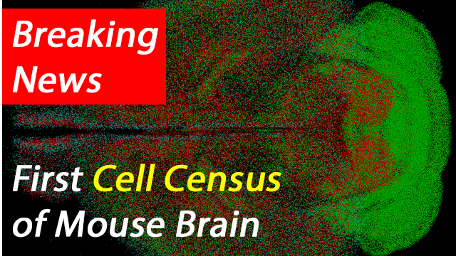 qBrain Platform Maps Neuronal Cell-Types Across Whole Mouse Brain
