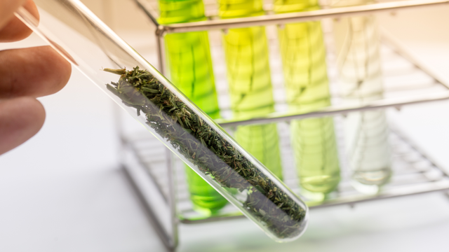 qPCR: A Powerful Tool for the Microbiological Testing of Cannabis