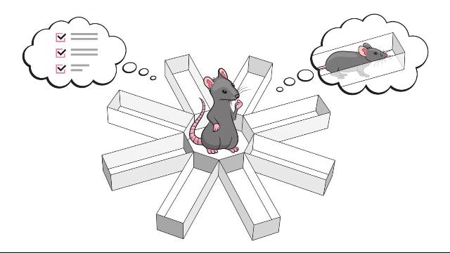 Reading Rats' Minds