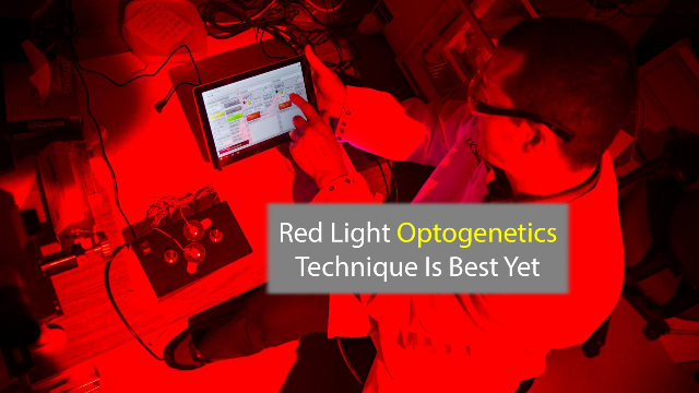 Red Light Means Go: New Optogenetic Tool is Most Efficient Yet