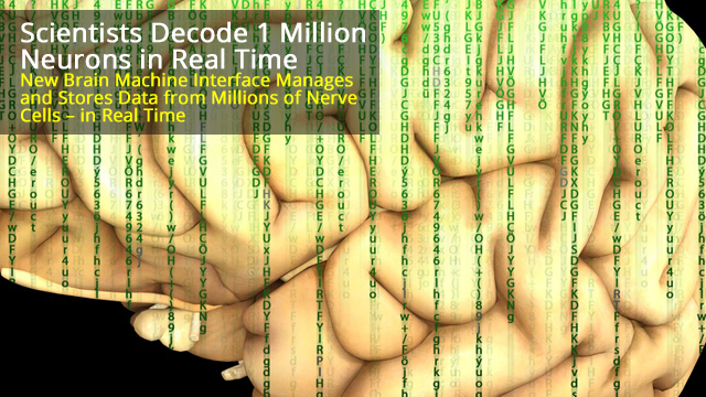 Researchers Can Now Decode Information from 1 Million Neurons in Real Time