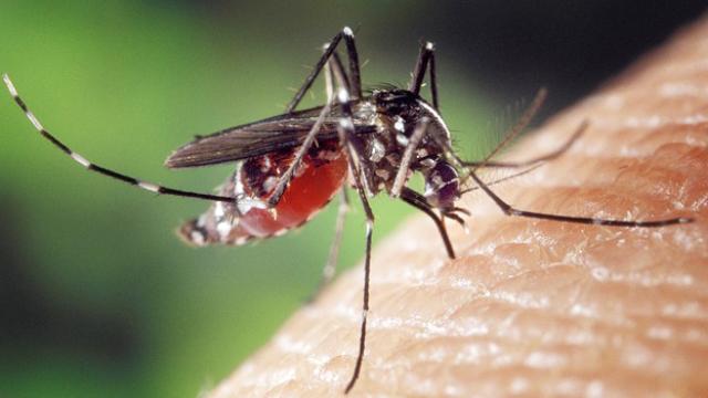 Researchers Identify Druggable Genomic Targets in Malaria Parasite