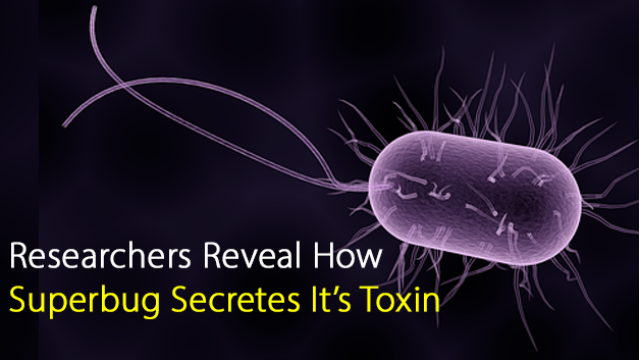 Researchers Reveal How Superbug Secretes It's Toxin