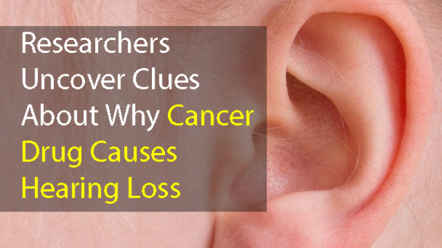 Researchers Uncover Clues About Why Cancer Drug Causes Hearing Loss