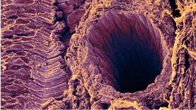 Retina Showing Rod Cells and Blood Vessel