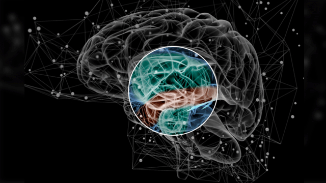 Risk Factors for Schizophrenia Lie in Brain Network Organization