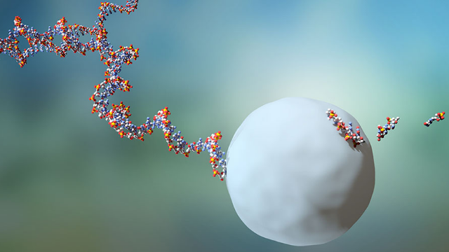 RNA Molecules Lives Are 10 Times Shorter Than Previously Thought