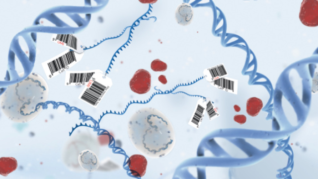 Sample to Insight: Everything you need to know about RNA sequencing