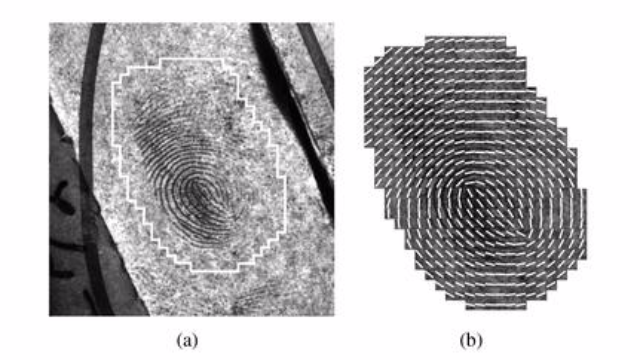 Scientists Automate Key Step in Forensic Fingerprint Analysis