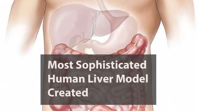 Scientists Create Most Sophisticated Human Liver Model Yet