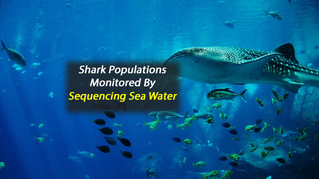 Scientists Monitor Shark Populations From DNA in Seawater