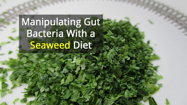 Scientists Use Dietary Seaweed to Manipulate Gut Bacteria in Mice