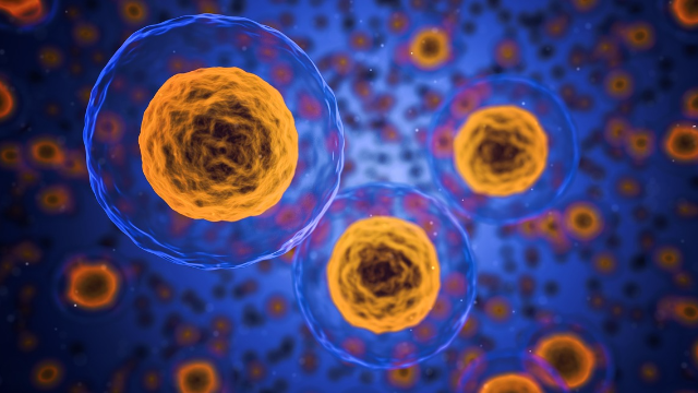 Seegene Will Announce New Seegene Random Access System at AACC
