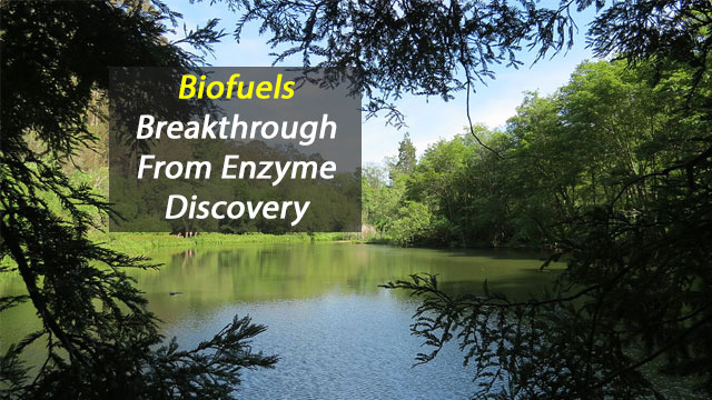 Sewage Sludge Leads to Biofuels Breakthrough