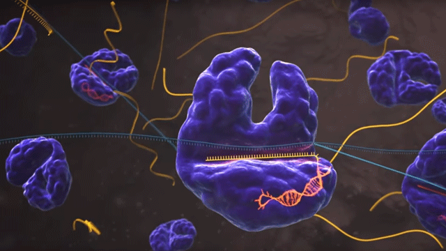 SHERLOCK: A CRISPR Tool to Detect Disease