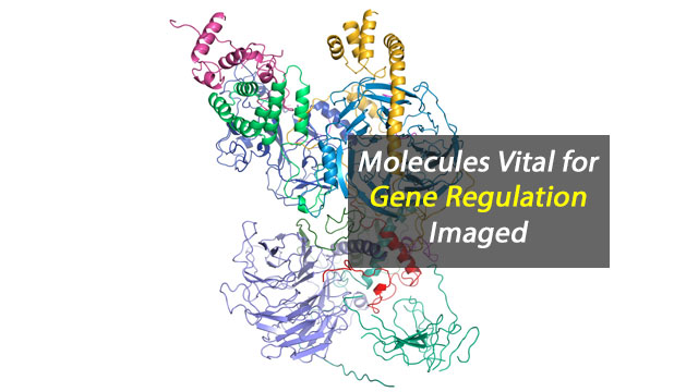 Silencing Is Golden: Scientists Image Molecules Vital for Gene Regulation