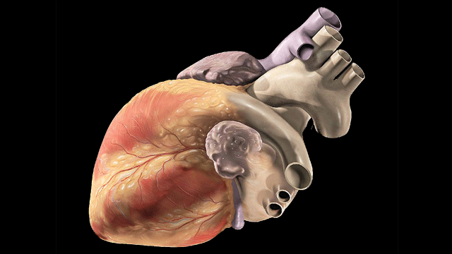 Single-Cell Analysis Reveals Stem Cell Journey in the Heart