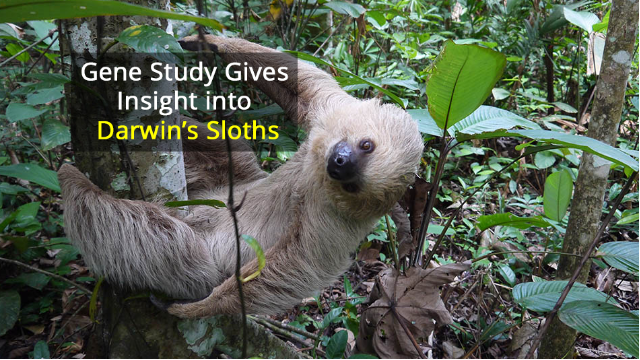 Slow Movement, Slow Evolution: How Sloths Became Tree-Dwellers Over 22 Million Years
