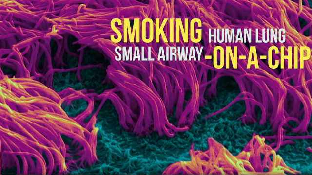 Smoking Human Lung Small Airway on a Chip