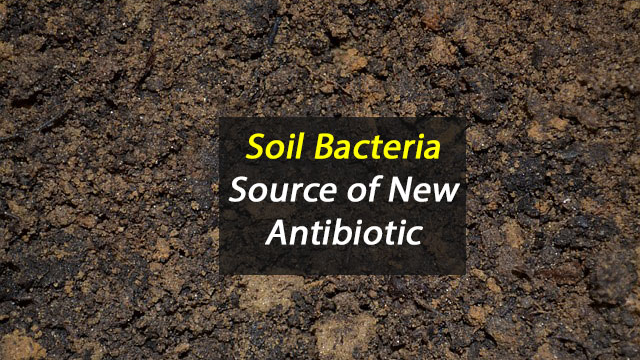 Soil Bacteria Source of New Antibiotic