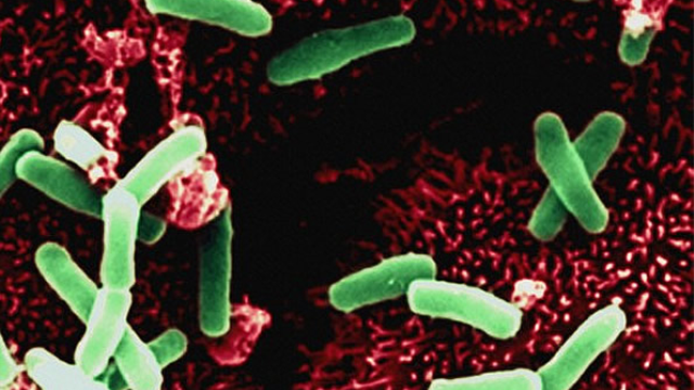 Microbes, mood, and mental health