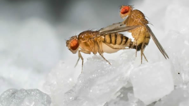 Pass the salt -- Using the fly to understand how pregnancy drives food cravings
